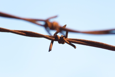 knotty: Rusty knotty barbwire