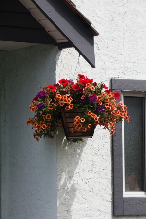 basket: Hanging Flower Basket and white wall Stock Photo