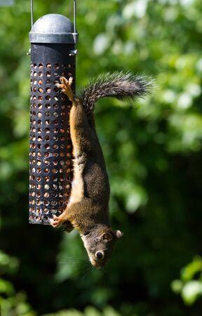 feeder: Squirrel and Bird Feeder close up