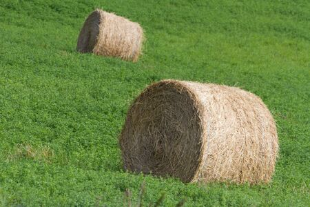 Hay Bale and green grass photo
