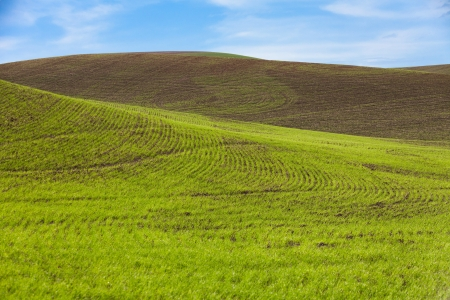 Farm Land and blue sky, green wheat fields photo