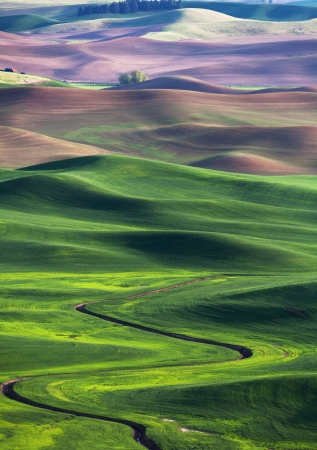 green wheat: rolling hill and Farm Land, green wheat fields