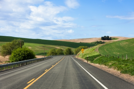 Country Highway , green wheat fields
