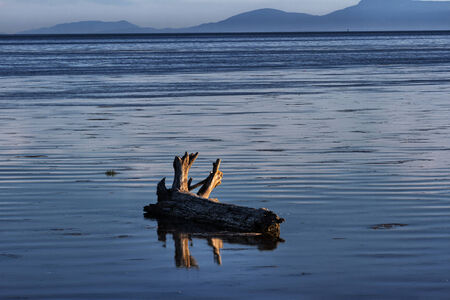 erode: Driftwood on sea beach at vancouver canada