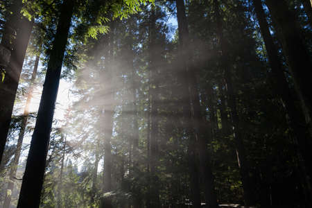 Forest and Sunlight for background