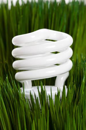 Compact Fluorescent Lightbulb and green grass Stock Photo