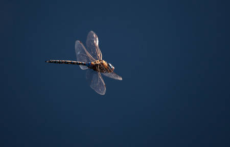 Dragonfly and blue sky