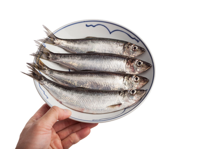 fresh herring in a plate, from Richmond BC Canada