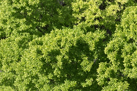 tree top view, green leaves