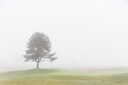 lonely tree: Lonely tree with foggy sky