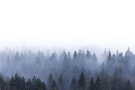 misty forest: foggy pine forest in Burnaby Mountain park BC Canada Stock Photo