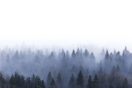 Mistig dennenbos in Burnaby Mountain Park BC Canada Stockfoto