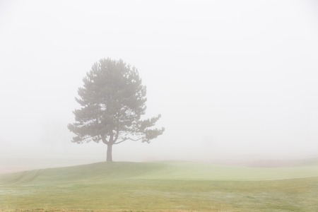 foggy: Lonely tree with foggy sky
