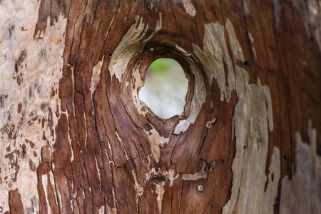 hollow tree: hollow tree trunk with a hole