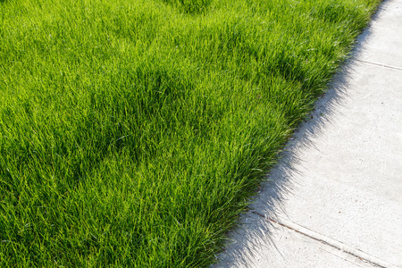 Cement walkway and green grass close up.