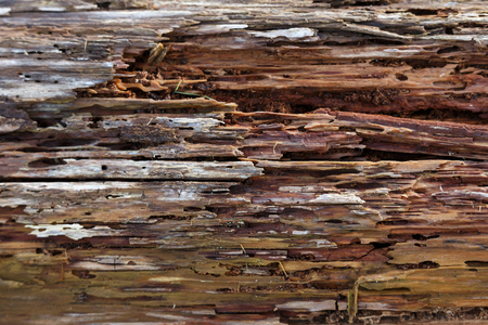 Old Rotten Wood  background texture, close up.