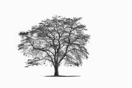 a winter tree isolated on white backgroud