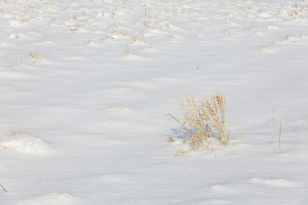 winter white snow and grass nature background Stok Fotoğraf