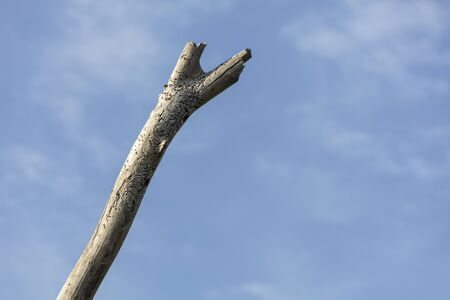 Dead tree branch with blue sky for background