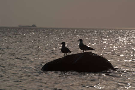 two seagulls on a stone in the sea sunset photo