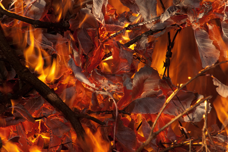 Wild fire burning leaves Stock Photo