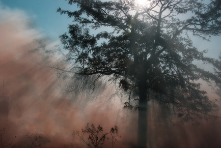 wild fire: Wild fire under tree with smoke rising and sun arrays shining thorugh