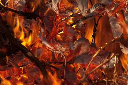 wild fire: Wild fire burning leaves with branches in the foreground