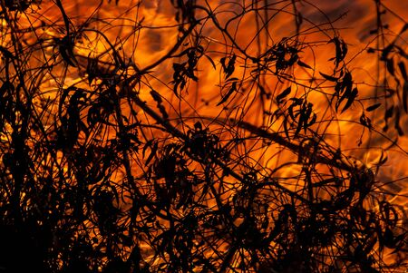 burning bush: Wild bush and grass fires with burning leaves Stock Photo