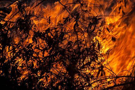 Burning Leaves in a wild fire with branches in the foreground