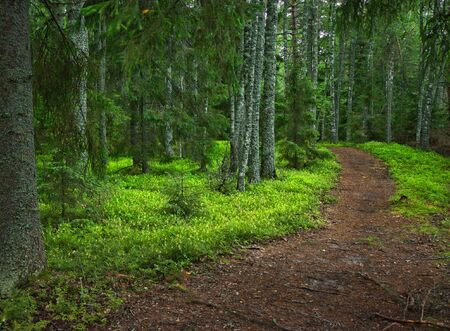 Path in a beautiful summer forest photo