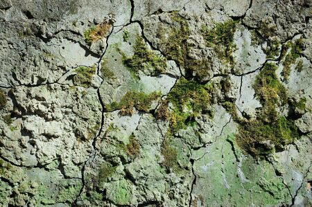Old cement wall with cracks and moss  photo