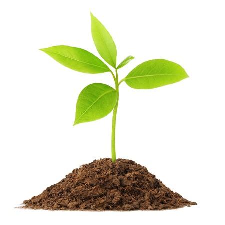 Giovane pianta verde cresce dal suolo