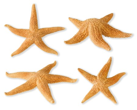 Sea-stars isolated on white photo