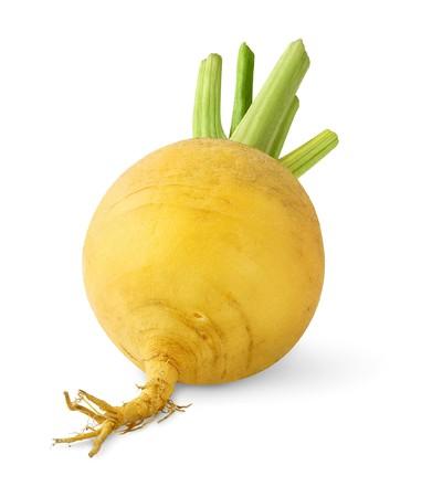 Turnip isolated over white