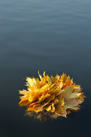 Bouquet of autumn leaves floating in water photo