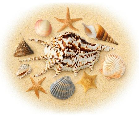 Sea shells over sand photo