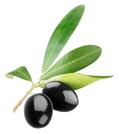 Two black olives on branch with leaves isolated on white photo