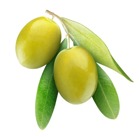 Two green olives on branch with leaves isolated on white