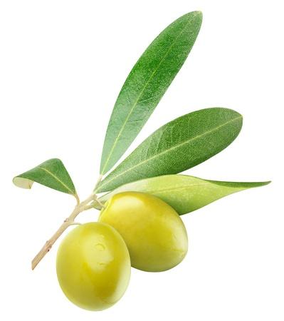 olive leaf: Dos aceitunas verdes en la rama con hojas aisladas en blanco