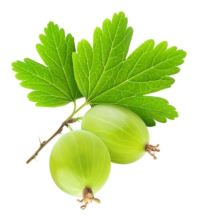 Two gooseberries isolated on white