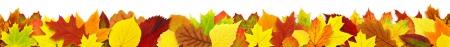 カラフルな秋葉白で隔離枠 写真素材