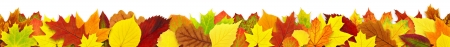 Colorful autumn leaves border isolated on white photo