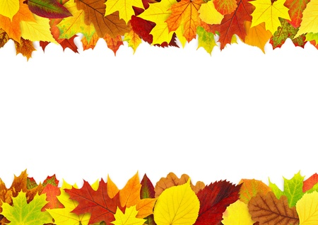 colorful autumn leaves border isolated on white stock photo picture