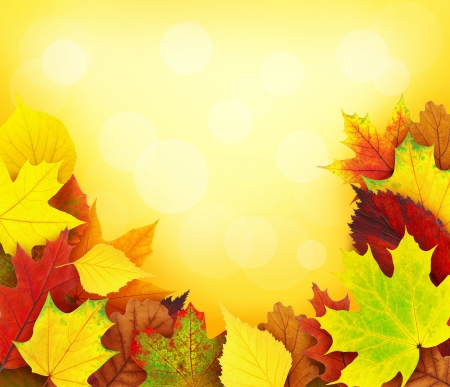 Colorful autumn leaves background photo