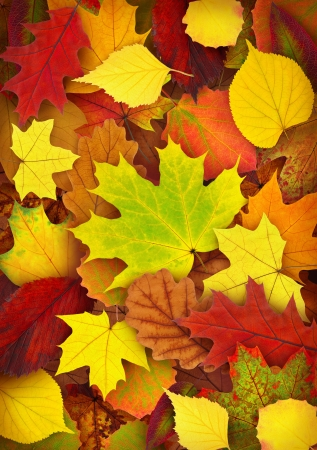 autumn leaves: Colorful autumn leaves background
