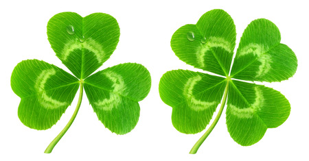 Three-leaf and four-leaf clover isolated on white  symbol of Saint Patrick