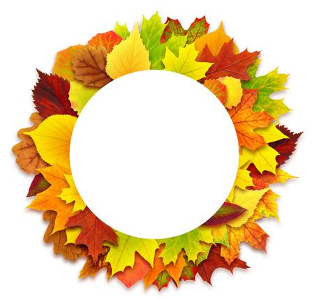 Round autumn leaves border isolated on white photo