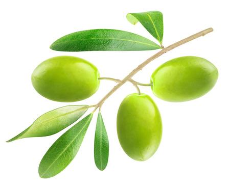 rama de olivo: Rama con aceitunas aislados en blanco