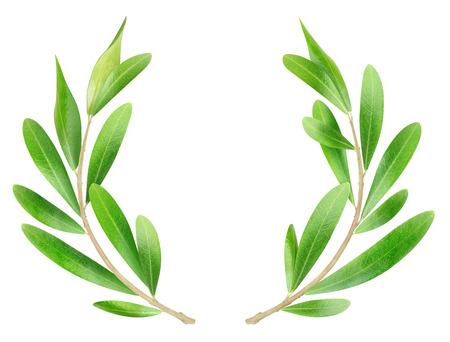 흰색 격리 된 올리브 가지