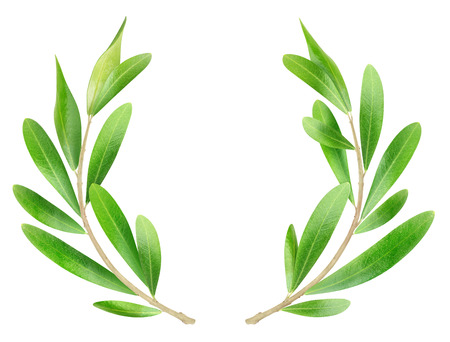 branch: Olive branches isolated on white